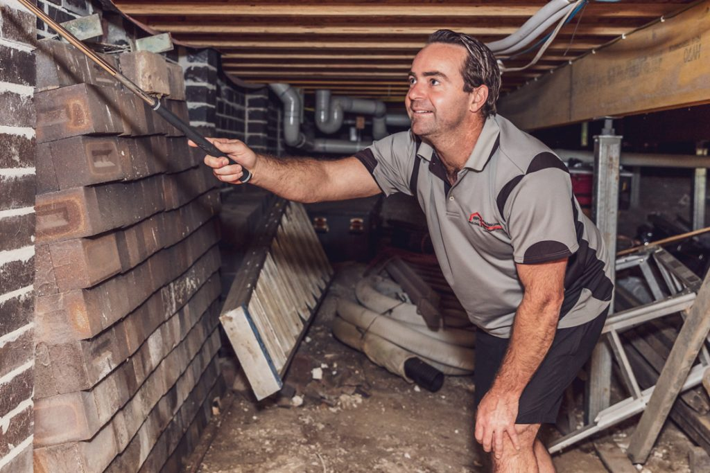 pest inspections wollongong
